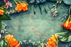 组成与热带植物花和叶子的创造性的花卉框架在黑暗的葡萄酒背景 免版税库存照片