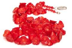成串珠状珊瑚查出的红色 免版税库存图片