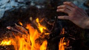 成人人在营火附近温暖手在森林里 库存照片