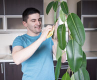 成人人清洗pipal在厨房里 免版税库存照片