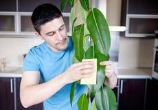 成人人清洗pipal在厨房里 库存图片