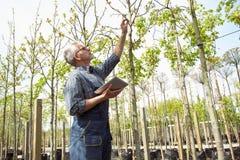 成人农艺师审查基因上修改植物的幼木 拿着片剂的手 在玻璃,胡子,佩带 免版税库存图片