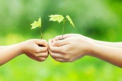 成人和孩子在手上的拿着一点绿色植物 免版税图库摄影