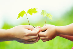 成人和孩子在手上的拿着一点绿色植物 免版税库存图片