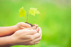 成人和孩子在手上的拿着一点绿色植物 免版税库存照片