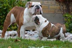 成人和小狗 免版税库存图片