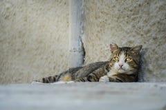 成人看哀伤照相机的被放弃的离群猫 免版税库存照片