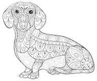 成人着色页放松的一只逗人喜爱的达克斯猎犬 禅宗艺术样式例证 免版税库存图片