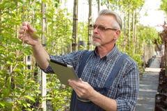 成人花匠在庭院商店检查植物 拿着片剂的手 在玻璃,胡子,佩带的总体 在 免版税库存图片
