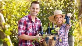 成功的夫妇种葡萄并酿酒的人 库存照片