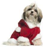 成套装备小狗圣诞老人shih tzu佩带 免版税库存照片