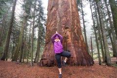 成年女性20s做在一棵巨型美国加州红杉树前面的瑜伽斡旋姿势 库存图片