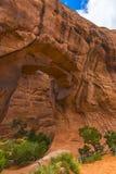 成拱形曲拱默阿布国家公园杉树犹他 免版税图库摄影