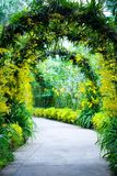 成拱形植物的新娘小径庭院 库存照片