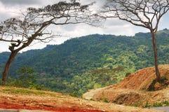 成拱形的树在宽扎Norte,安哥拉 库存照片