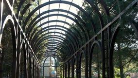 成拱形结构树 股票视频