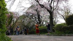 成熟亚裔访客走和享用开花在春天,东京,日本的佐仓 股票视频