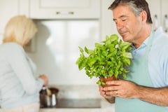 成熟人微笑的和嗅到的蓬蒿植物 免版税图库摄影