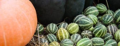 成熟南瓜、黄色,绿色镶边和小橙色秋天南瓜patissons用西红柿,干草反对backgrou 免版税库存照片