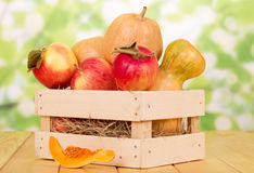 成熟南瓜和苹果在木箱在抽象绿色背景 免版税库存照片
