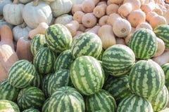 成熟南瓜和西瓜在农夫市场上在乔治亚 农业南瓜和西瓜 库存照片