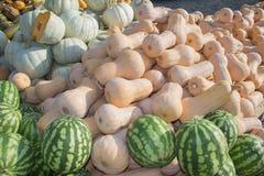 成熟南瓜和西瓜在农夫市场上在乔治亚 在秋天季节的南瓜和西瓜收获 库存照片