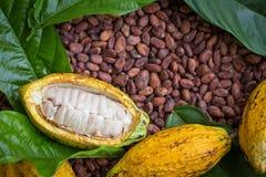 成熟可可粉荚和豆在土气木背景设定了 免版税库存图片