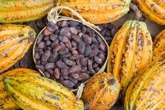 成熟可可粉荚和豆在土气木背景设定了 免版税库存照片