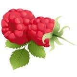 成熟叶子的莓 库存图片