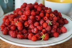 成熟和红草莓 库存图片