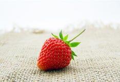 成熟和水多的红色草莓莓果 免版税图库摄影