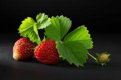 成熟和水多的红色草莓莓果 库存图片