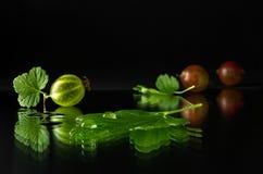 成熟和水多的鹅莓 免版税库存照片