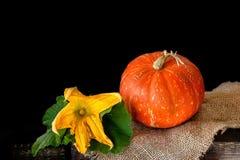 成熟圆的橙色南瓜基于在土气样式的木背景 在黑背景的孤立 库存图片