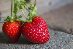 成熟在摊铺机走道的草莓 免版税库存照片