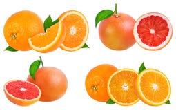 成熟在白色隔绝的桔子和葡萄柚 免版税库存照片