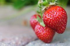 成熟在阳光下在摊铺机走道的Lucious stawberries 免版税库存照片