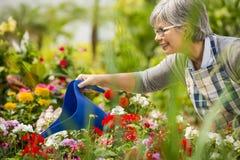 成熟妇女浇灌的花 免版税图库摄影