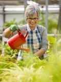 成熟妇女浇灌的花 库存图片