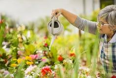 成熟妇女浇灌的花 免版税库存照片