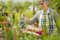 成熟妇女浇灌的花 库存照片