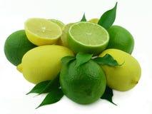 成熟小叶的柠檬 图库摄影