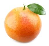 成熟开胃葡萄柚的叶子 免版税库存图片