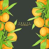 成熟新鲜的桔子 免版税库存照片