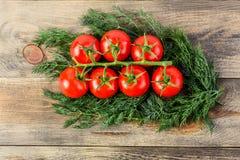 成熟新鲜的蕃茄分支与水下落和很多莳萝的 图库摄影