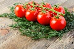 成熟新鲜的蕃茄分支与水下落和很多莳萝的 库存照片