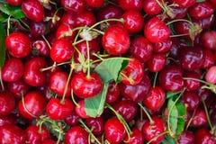 成熟有机新近地被采摘的甜樱桃堆与绿色叶子的在地中海农夫市场上 夏天收获维生素 免版税库存照片