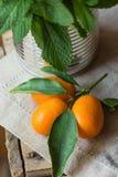 成熟有机金桔绿色分支在锡罐瓶子亚麻制毛巾土气厨房内部全部把束新鲜薄荷留在 免版税库存照片