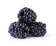 成熟有机黑莓 库存图片