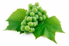 成熟束葡萄绿色查出的叶子 免版税库存图片